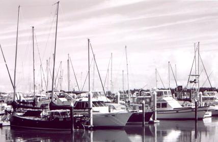 marina.jpg (36498 bytes)